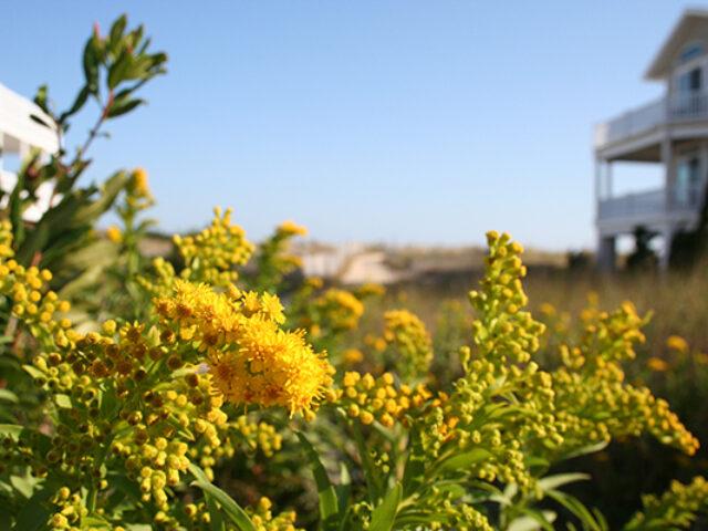 Flora & The Beach