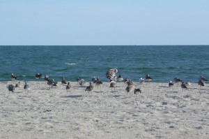 jennifer15birds on beach